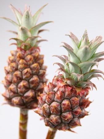 The pineapple for admiration (1).jpg