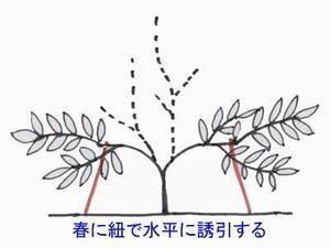 biwa-sente012-thumbnail2.jpg