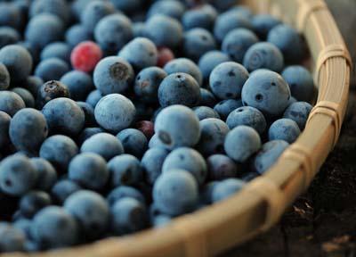 blueberry (7).jpg
