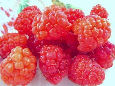 raspberry1new.jpg