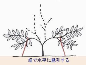 sakuranbo-sente012-thumbnail2.jpg