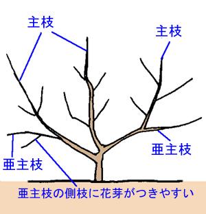 sente-mokuhyo (2).jpg